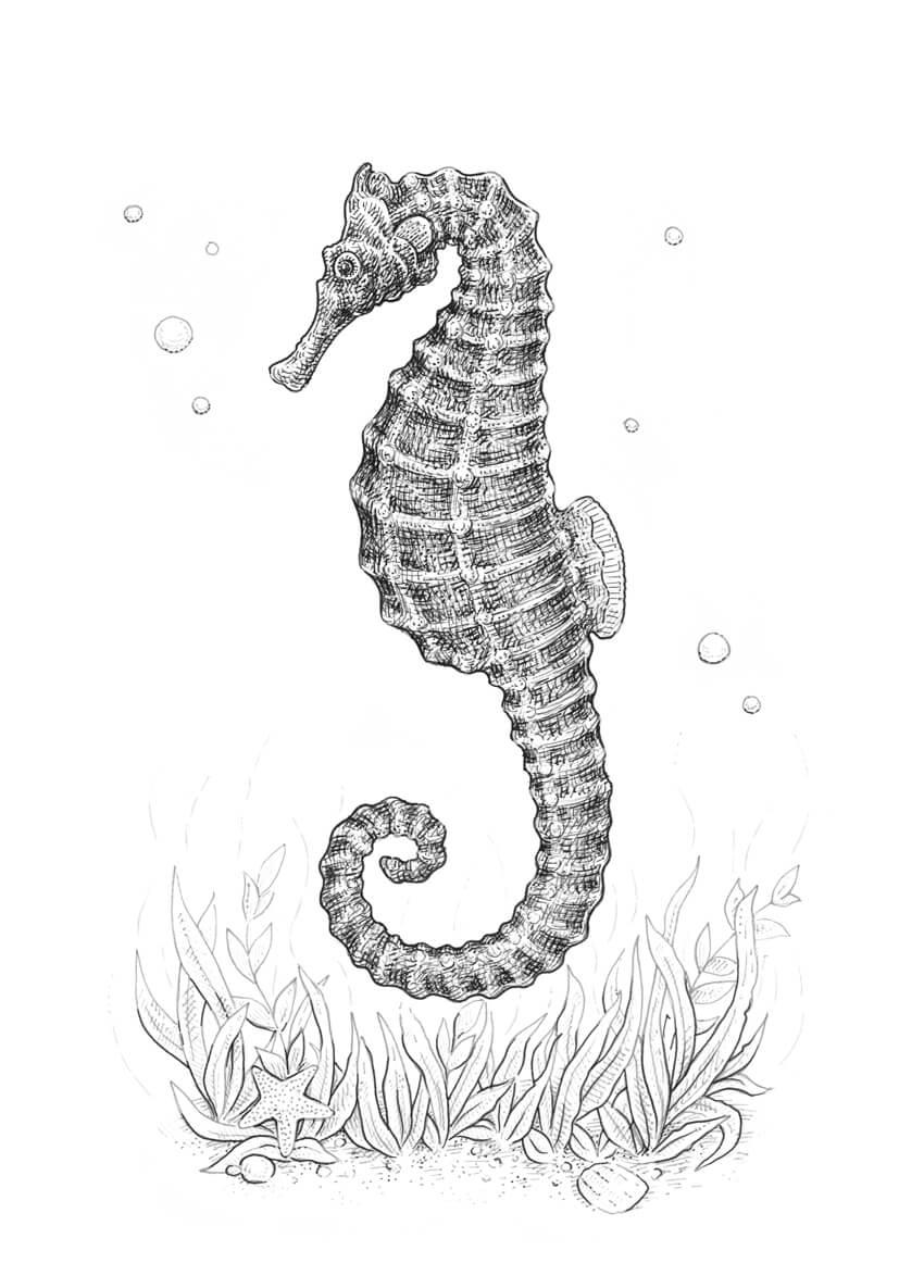 sea horse diagram