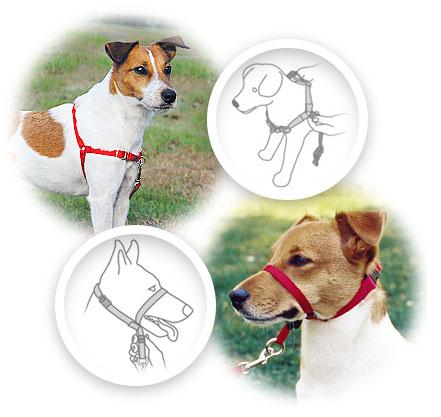 PetSafe Easy Walk Dog Harness, Black/Silver, Medium/Large - Chewy