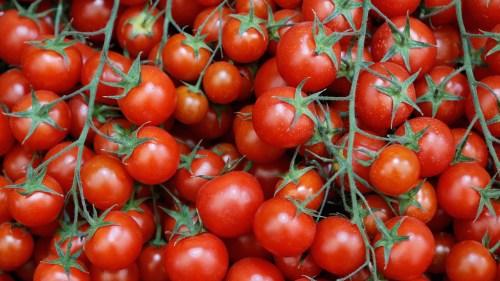 Medium Of Tomato Growers Supply