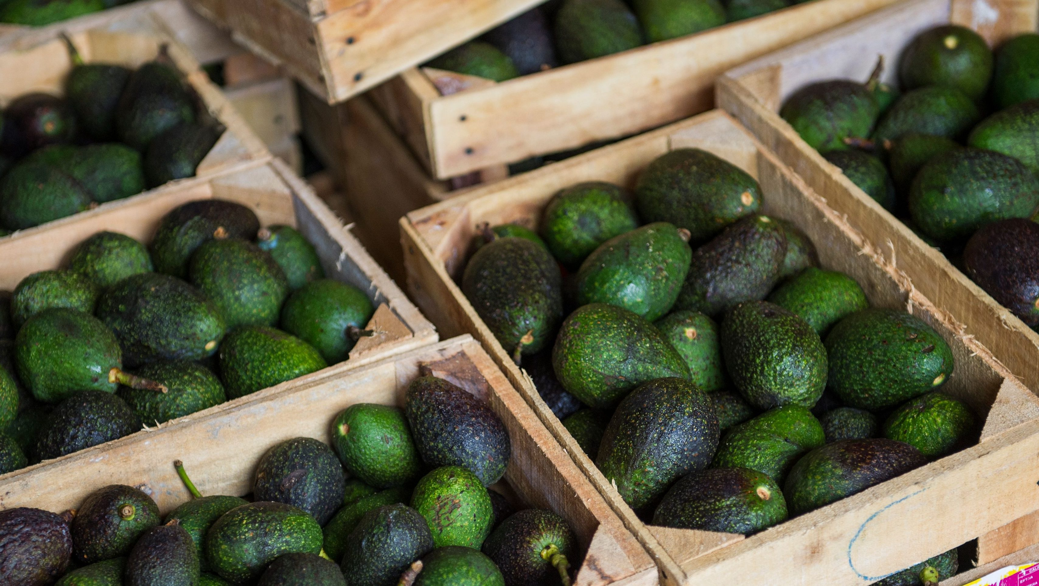 Avocado Boom Could Europe S Insatiable Hunger For Avocados Be Causing A Drought