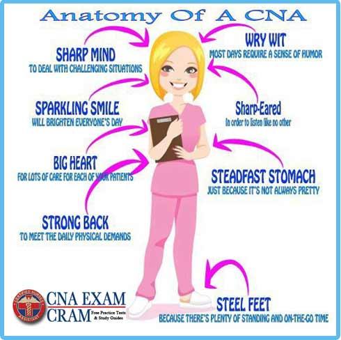 cna job duties resumes - Onwebioinnovate