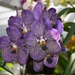 Orchid sale and growing tips at QEII Botanic Park