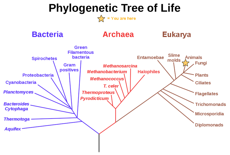 Themes and Concepts of Biology Boundless Biology