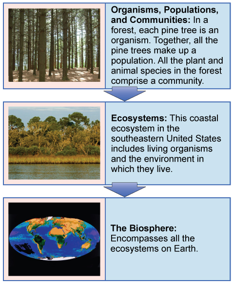 The Scope of Ecology Boundless Biology