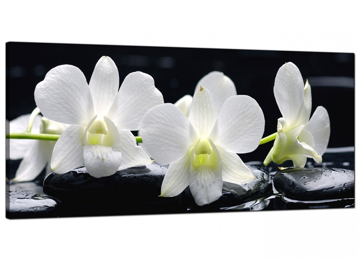 Large Black And White Posters Large Black And White Canvas Prints Of Orchid Flowers