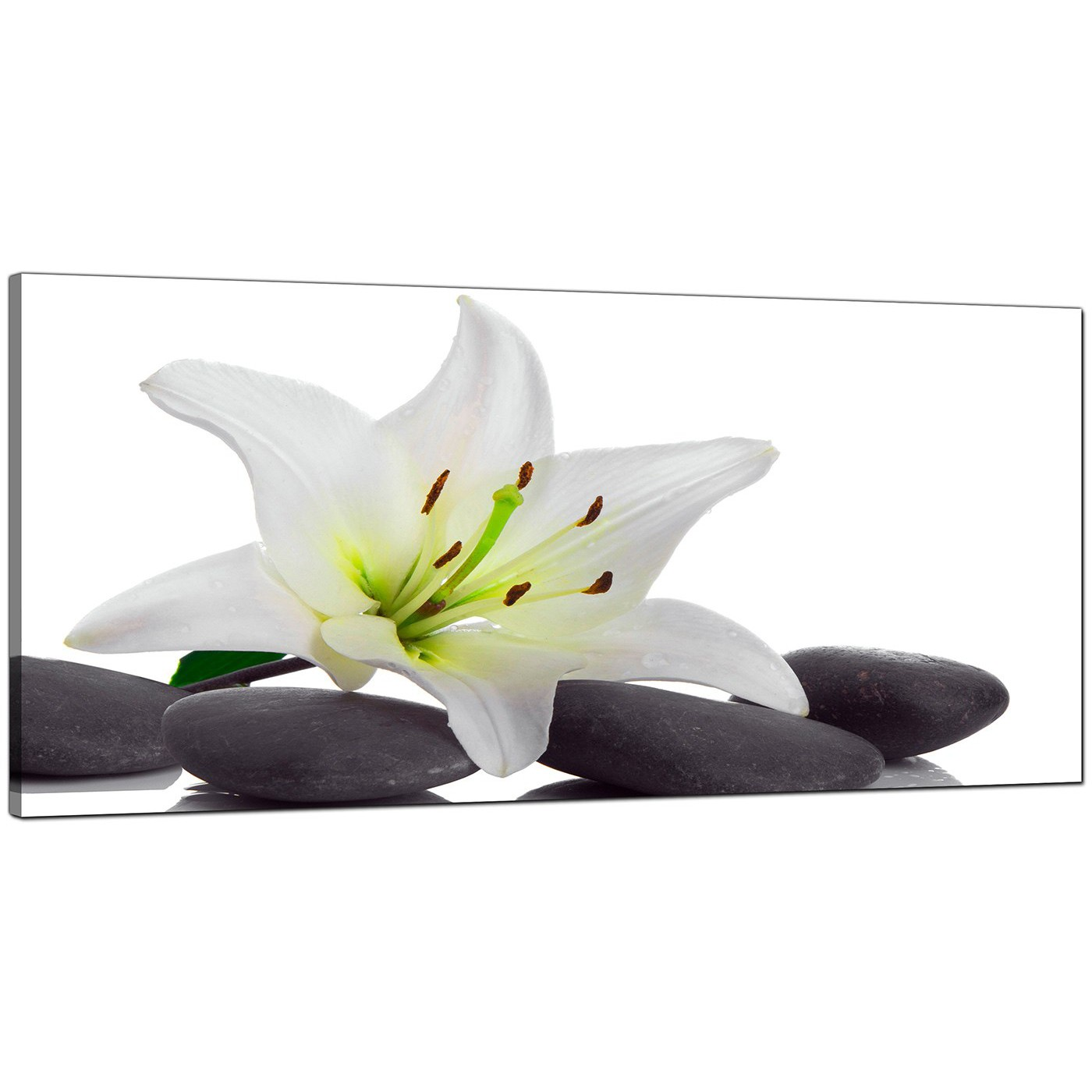 Black And White Canvas Prints Large Black And White Canvas Prints Of A Lily Flower
