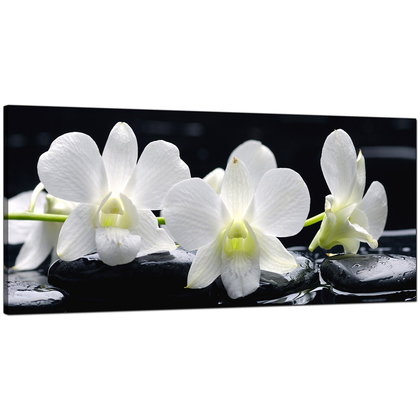 Black And White Canvas Prints Large Black And White Canvas Prints Of Orchid Flowers