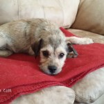 Johnny! Be Good! A Dog Rescuer Story