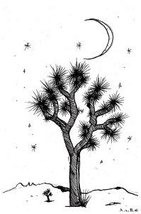 juoshua-tree