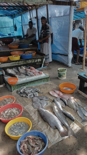 Fish Market in Kochi