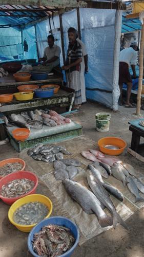 Fish Market in Kochi