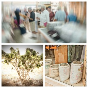 Frankincense: tree, in bulk, shop in souk