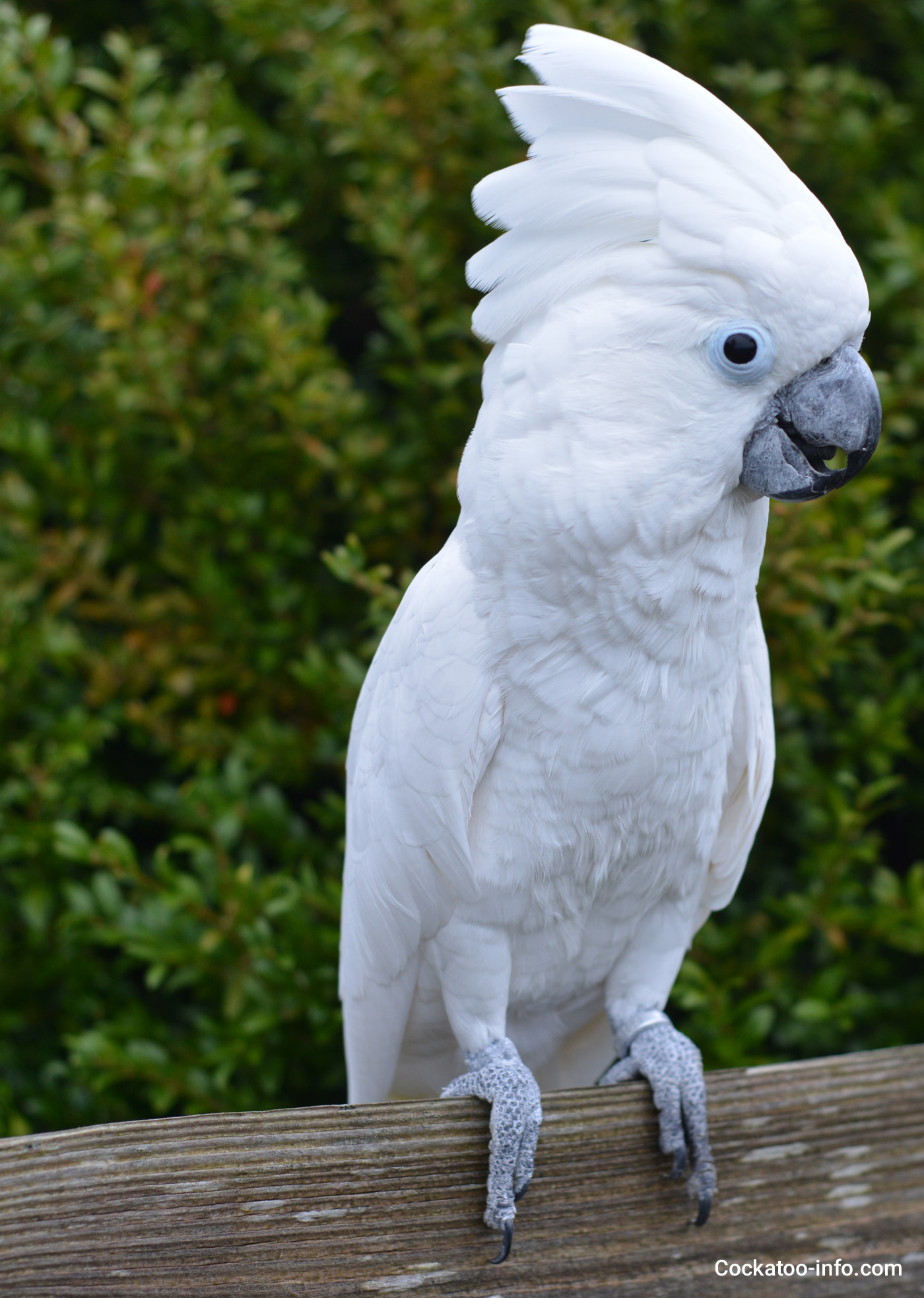 Specialized Wallpaper Hd Locations For Buying A Cockatoo Cockatoo Info Com
