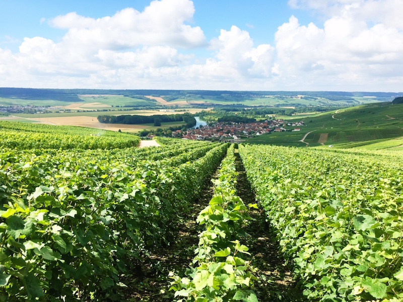 Champagne Wine Region Tour