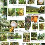 Coconut catalogue