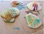 deniz-kabugu-boyama