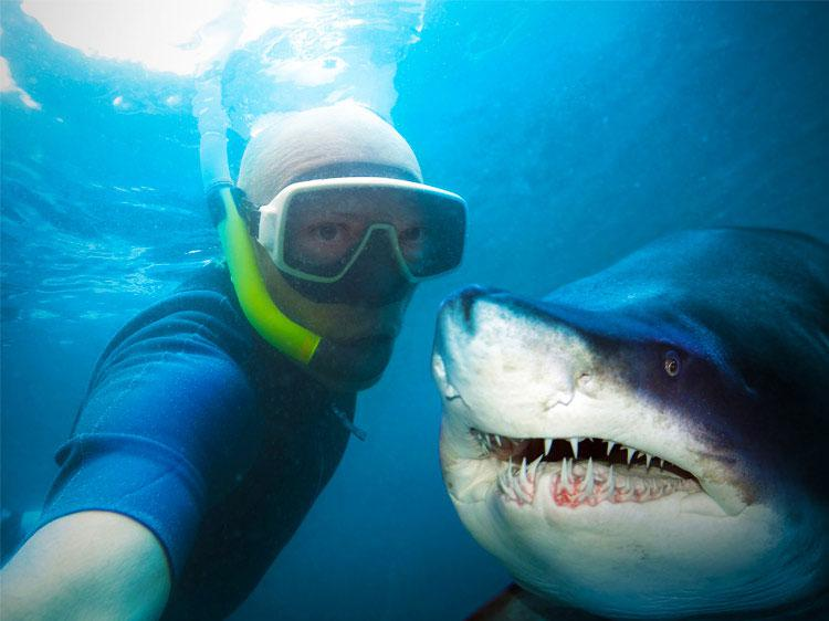 5 Jobs To Satisfy Your Inner Shark Lover Monster - marine biologist job description