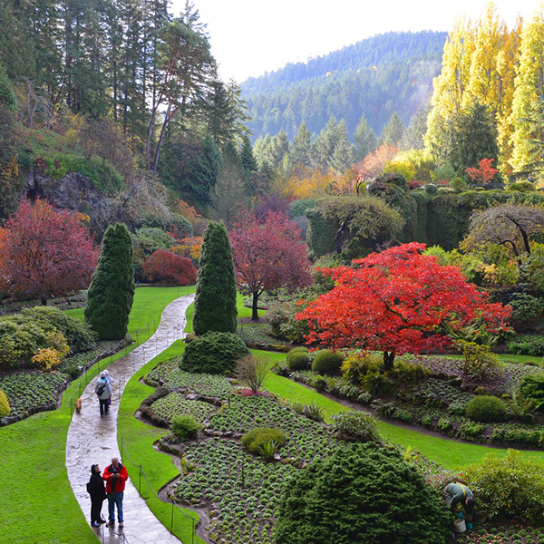 Car Rental Or Shuttle The Butchart Gardens With Shuttle Transportation And Ferry