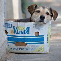 Blipster Life: Homeless Dogs