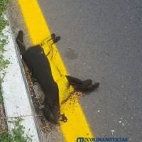 Denuncian la mala actitud del responsable de pintar señalamientos en carretera Coquimatlán-Colima