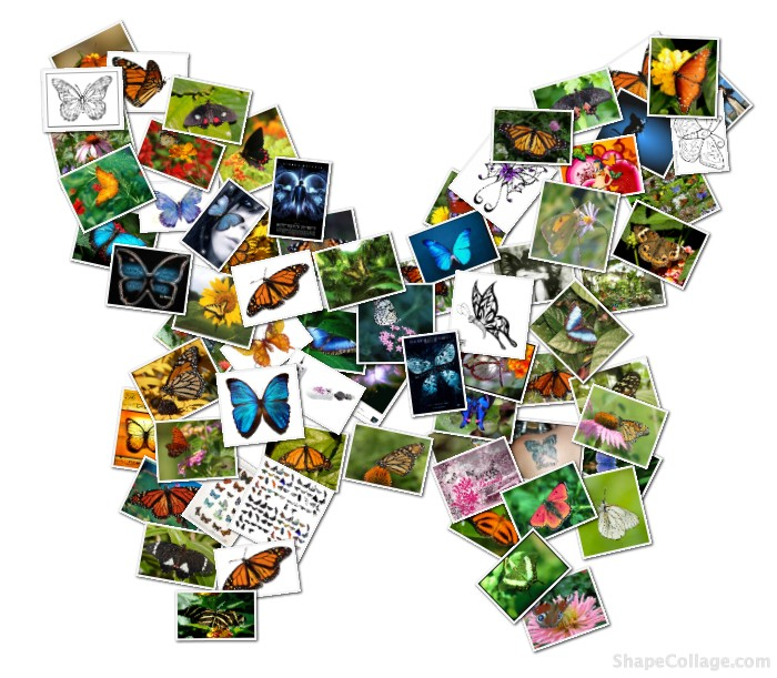 Butterfly Collage Loupe Collage Loupe