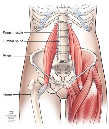 Lower Back Pain and Hip Flexor Involvement - Collier Chiropractic