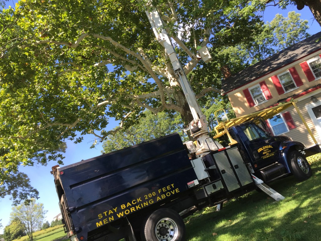 Colonial Tree offers bucket truck rentals with expert operator