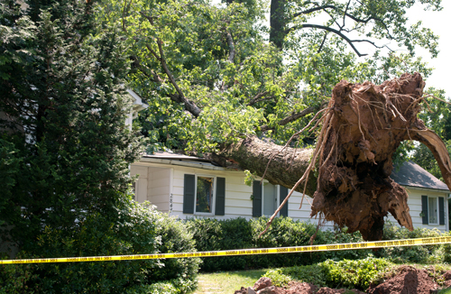 Fallen tree damages a house