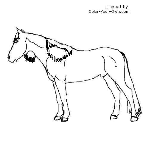 Spanish Barb STallion Coloring Page