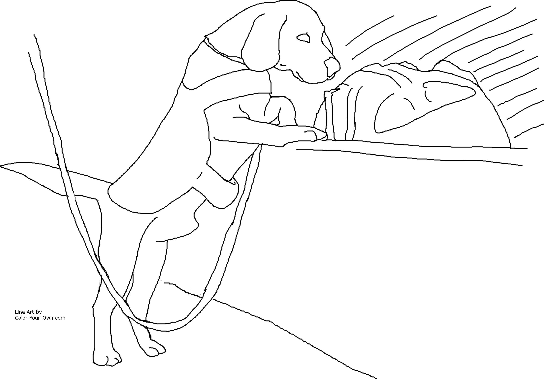 co detector beagle