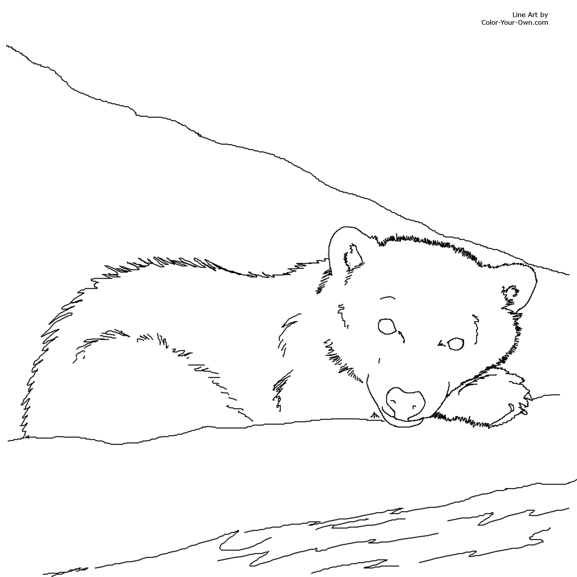 Free Coloring Pages Of Animal Jam Snow Leopard