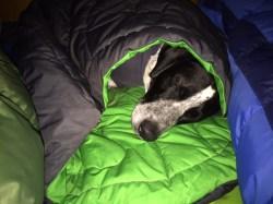 Small Of Dog Sleeping Bag