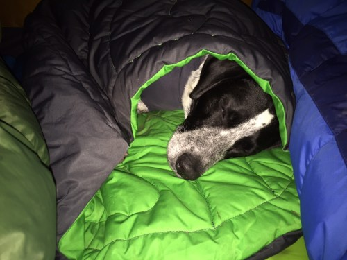 Medium Of Dog Sleeping Bag