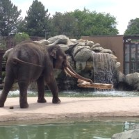 Top 5 Experiences at the Denver Zoo
