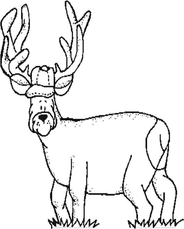 Amazing Hunting Dog Coloring Pages Info With