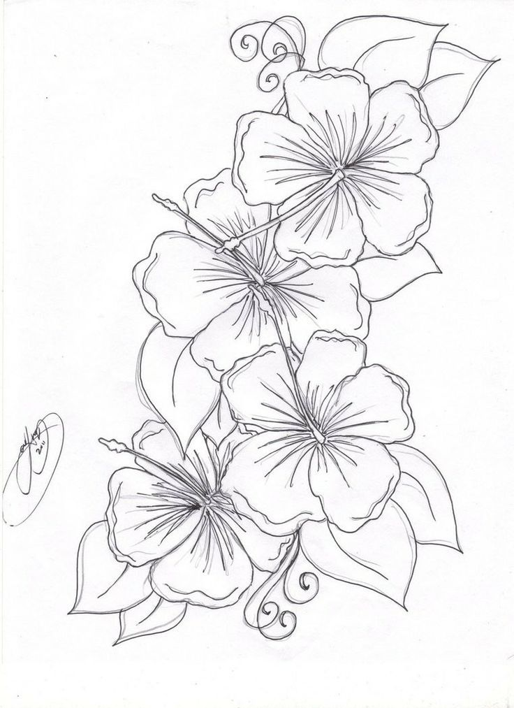 Printable Coloring Pages Of Hawaiian Flowers - Coloring Home