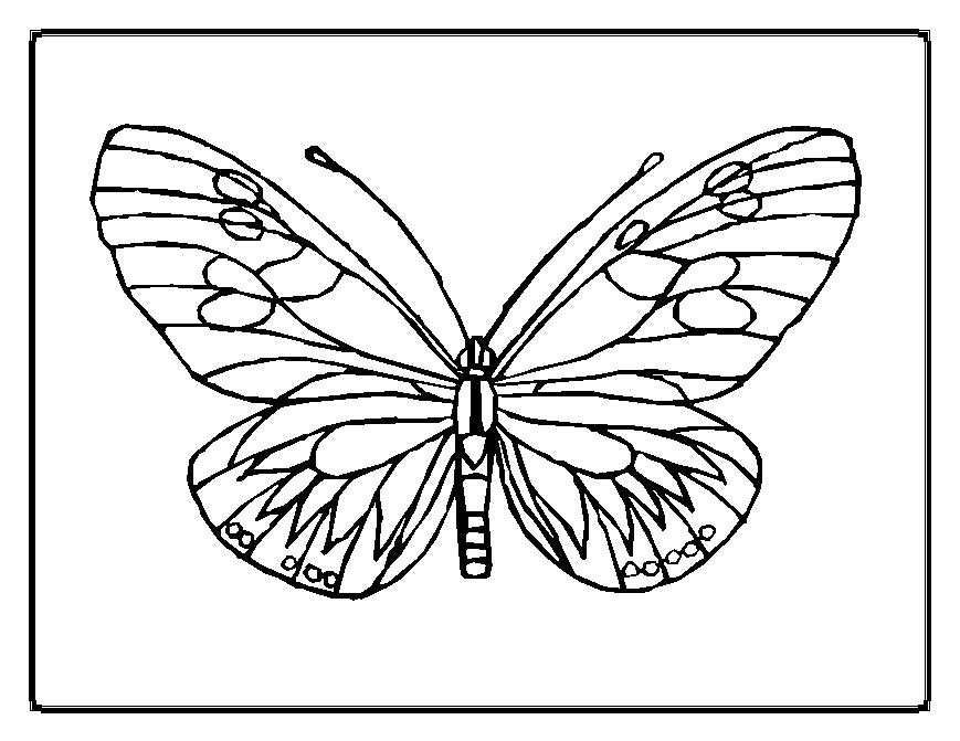 outline of a butterfly printable