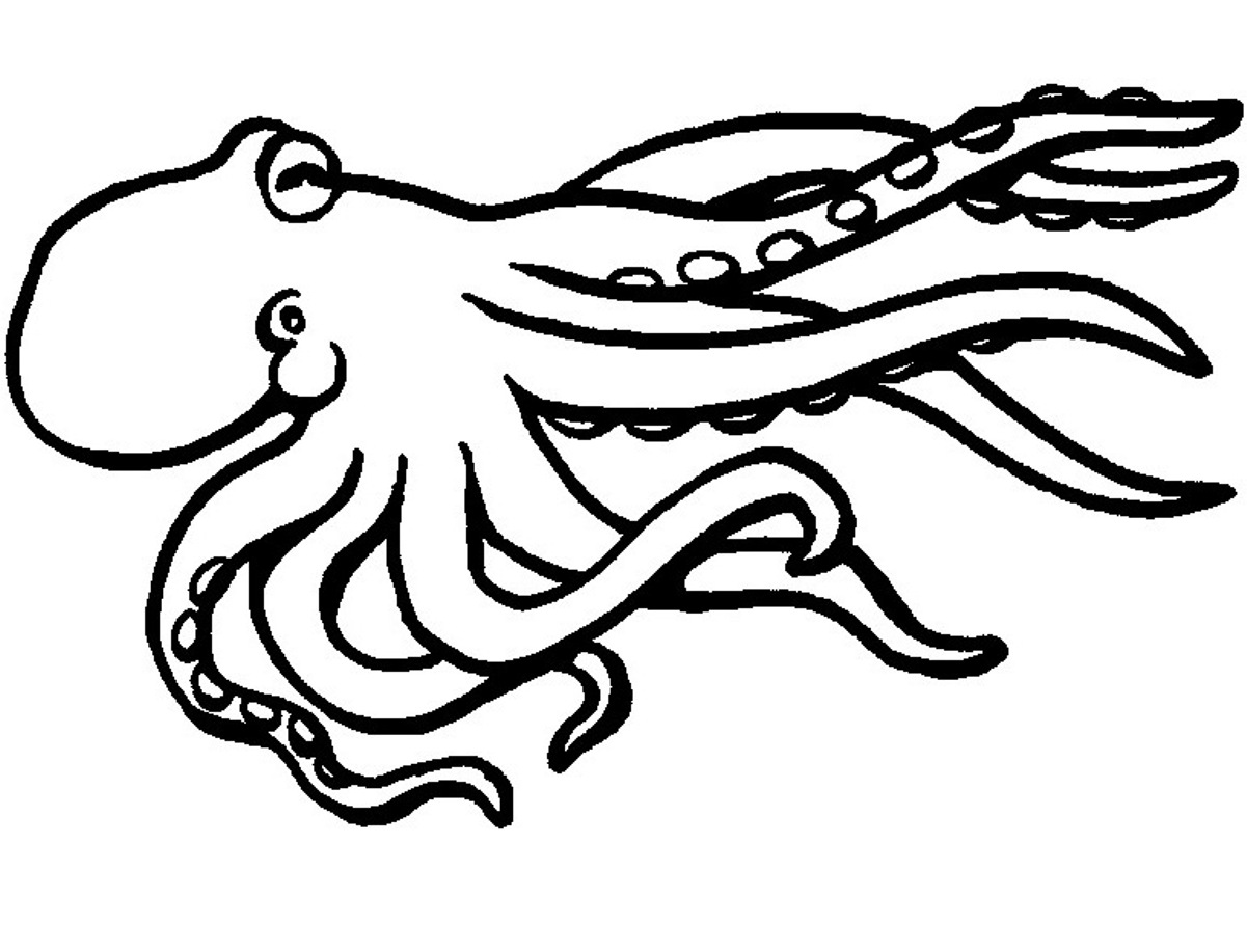 Squid Coloring Pages - Democraciaejustica