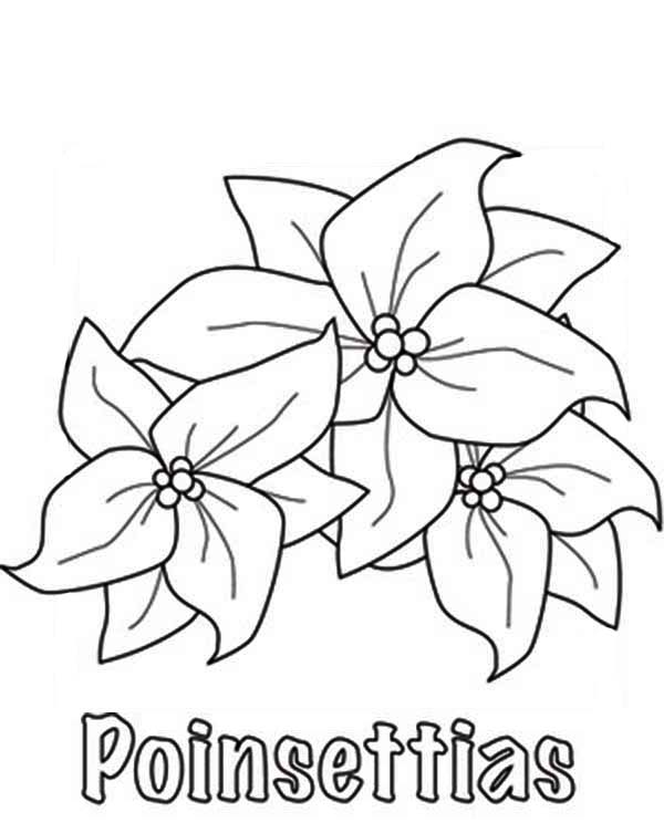 Poinsettia Flower Dogs Poinsettia Picture Coloring Page : Color Luna