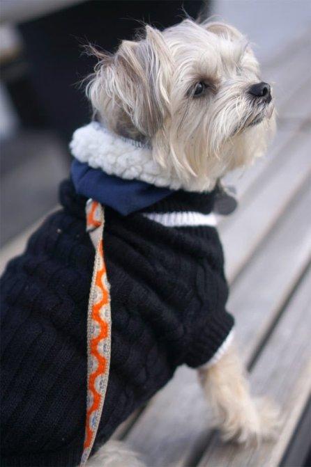 Minnie In Manhattan - dog model