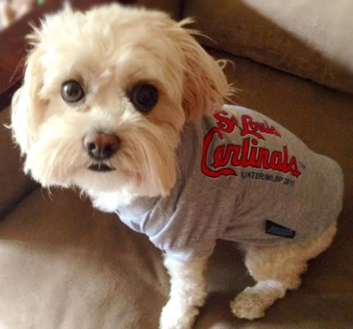 dog sports clothes