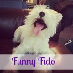 Funny Fido: Dog Gets Really Excited About a Road Trip!