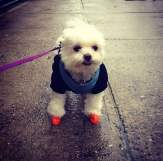 Me in my PAWZ! Essential for rainy/snowy days in the big apple!