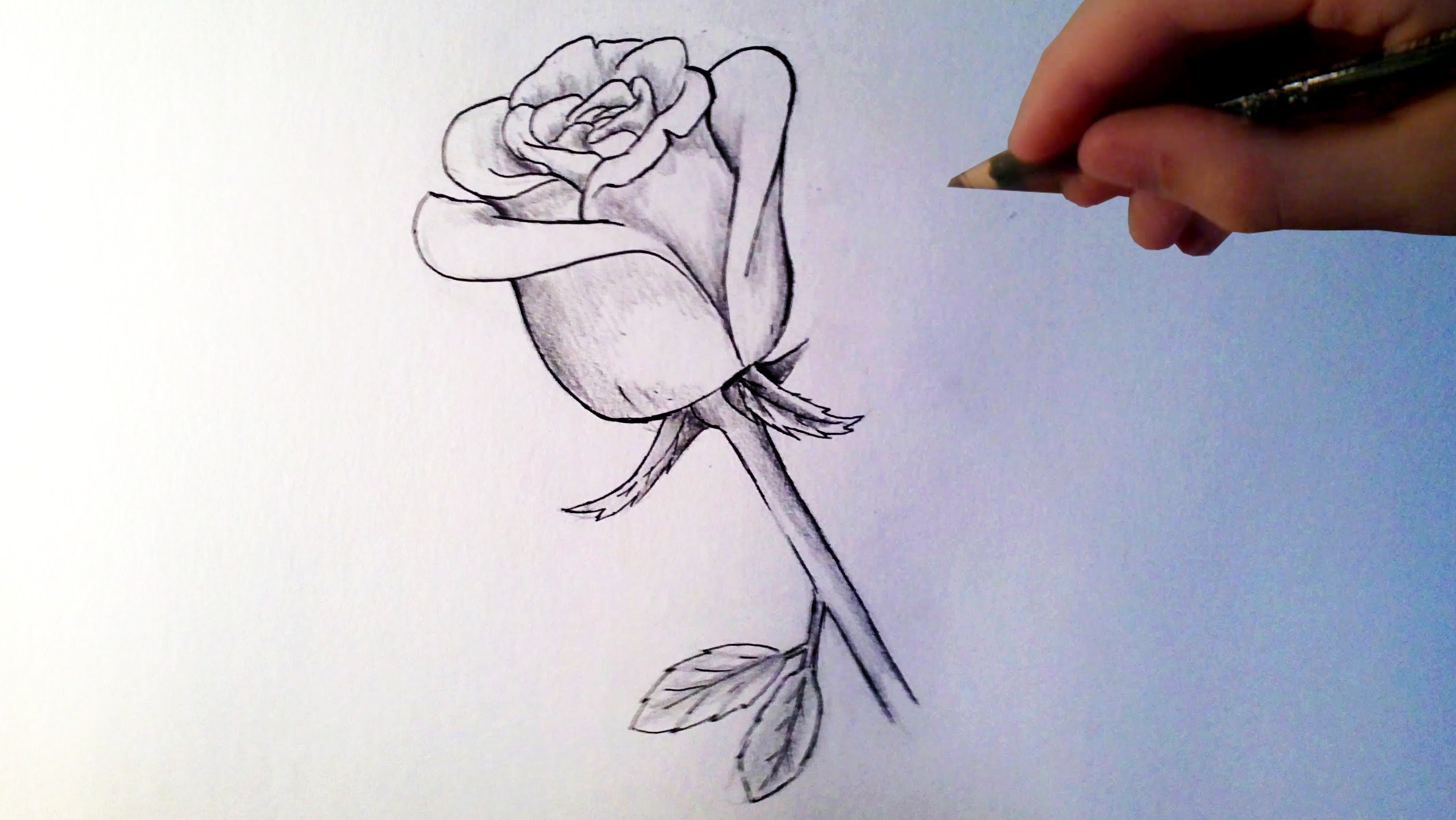 Photo Facile A Dessiner Comment Dessiner Rose