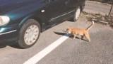 猫バンバンプロジェクト!?日産の猫を救うための啓蒙動画がかわいい!