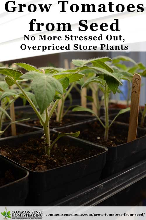Grow Tomatoes From Seed - Save Money, Get More Varieties