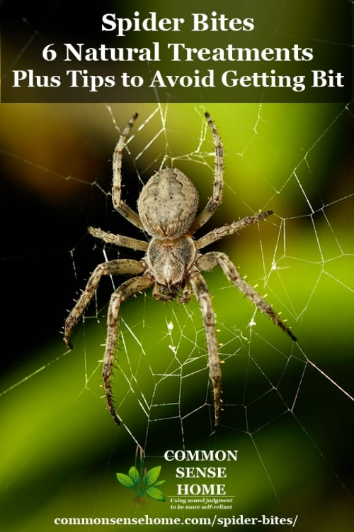 Spider Bites - 6 Natural Treatments + Tips to Avoid Getting Bit