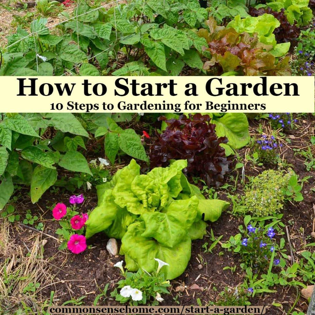 how to start a flower garden 3 steps for beginners