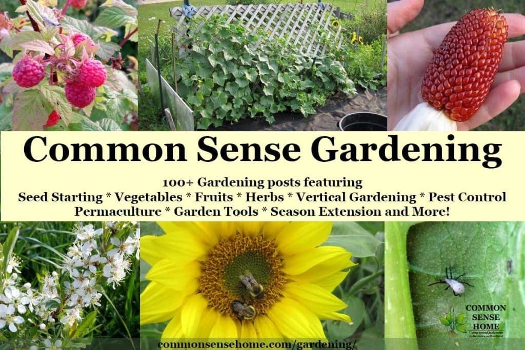 Common Sense Gardening - Home Garden Ideas from Planting to Harvest