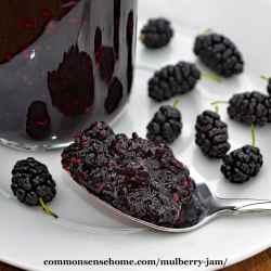 Small Of Mulberry Vs Blackberry